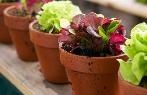 Decorazione Vasi Da Giardino : Vasi da esterni vasi vasi da esterno tipologie