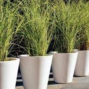 Vasi per piante vasi come scegliere i vasi migliori for Migliori piante da terrazzo