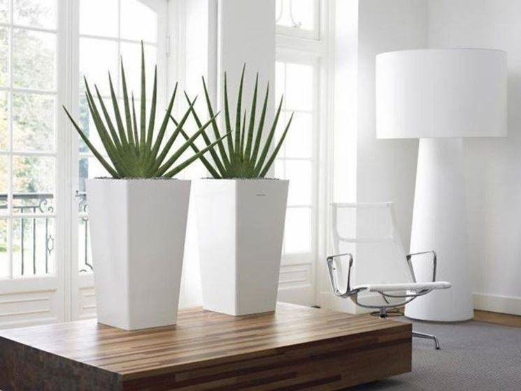 Vasi piante vasi for Vasi arredo interni