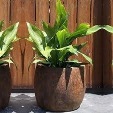 vaso pianta legno