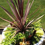 vaso piante