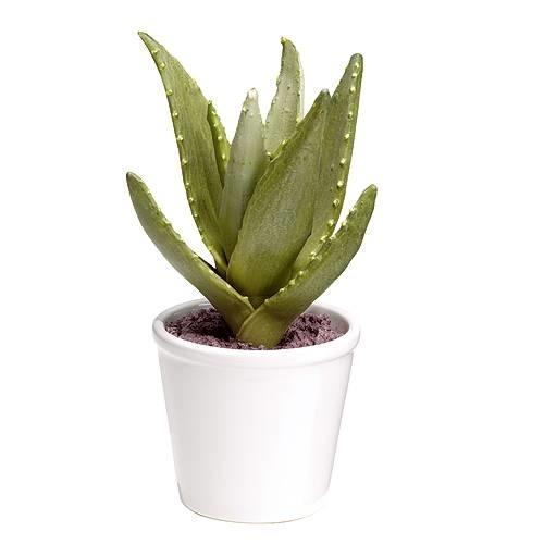 vaso piante - Vasi