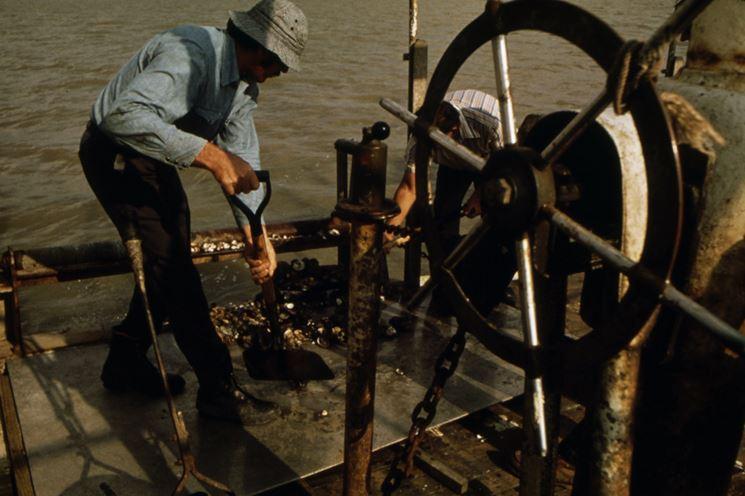 Badile manicato utilizzato sulle rive del Missisipi
