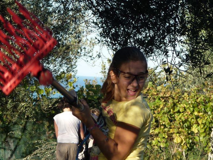 Rastrello scrollatore per olive