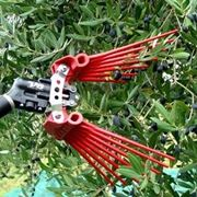 attrezzi per raccogliere le olive