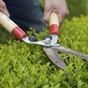 Forbice da giardinaggio manuale