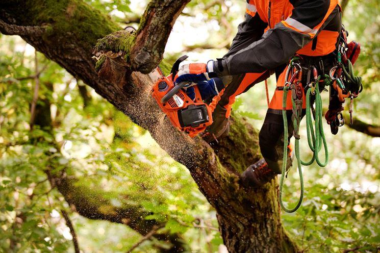 Tree climbing con motosega a batteria