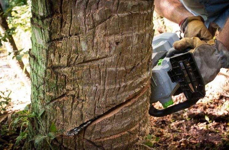Motosega per il taglio di legna