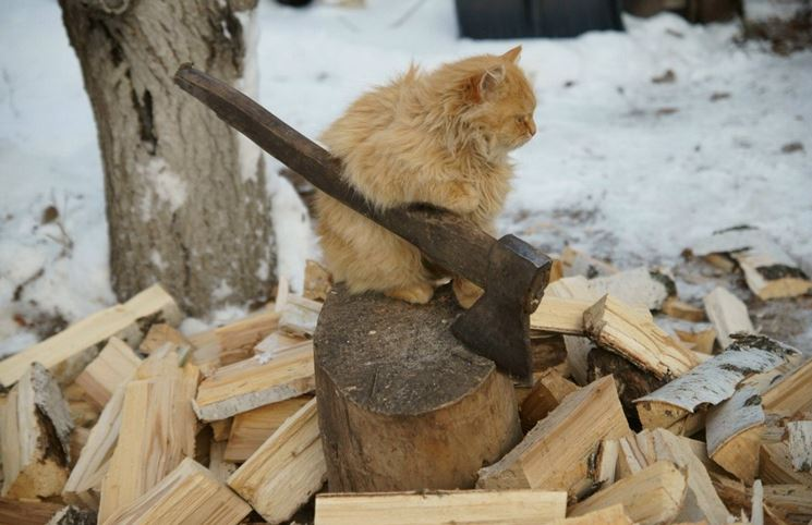 spacca la legna