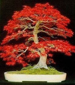 Annaffiatura domande e risposte bonsai for Timer per innaffiare