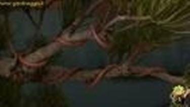 Filo metallico su bonsai