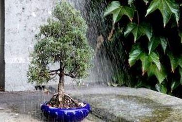 innaffiare bonsai