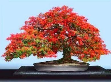 Tokyo: Tra negozi e musei, una passione per i bonsai