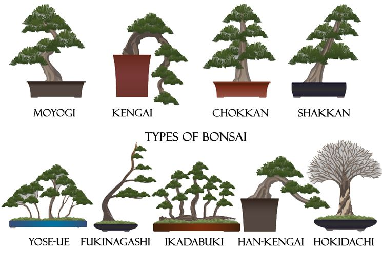 bonsai, stili, miniature, alberi
