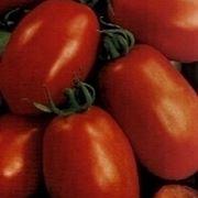 fosforo pomodori