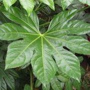 forme delle foglie