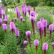 produce fiori in spighe
