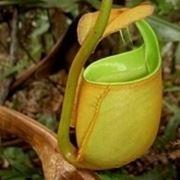piante mangia insetti