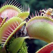piante carnivore cura