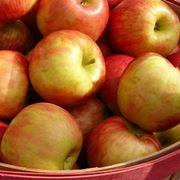 decotto di mele