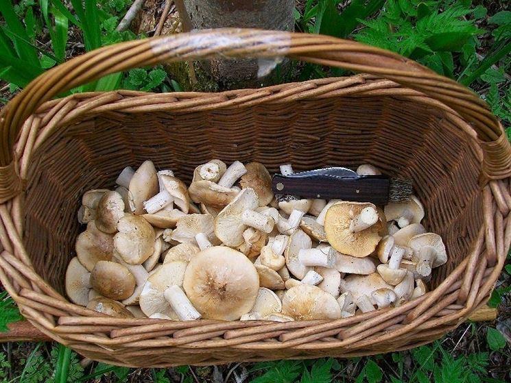Un cestino pieno di funghi di tipo maggiolino