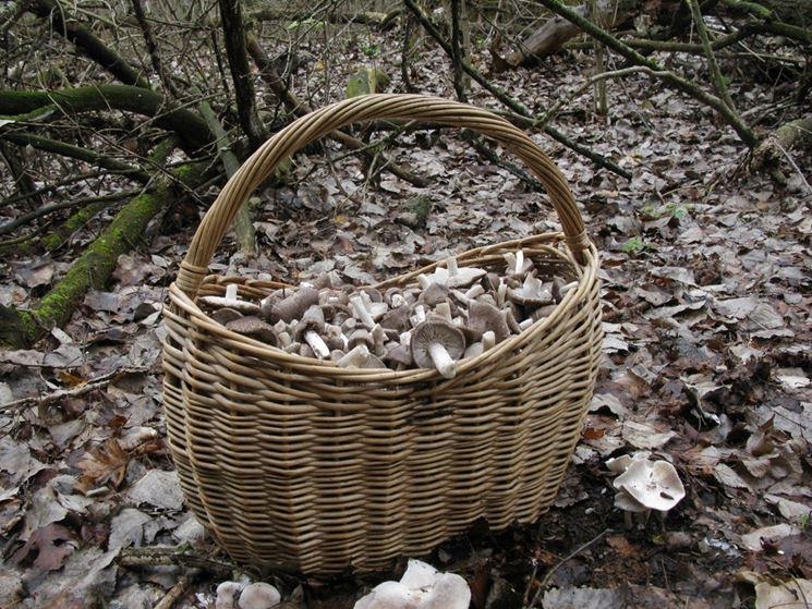 Cesto pieno di funghi di tipo moretta