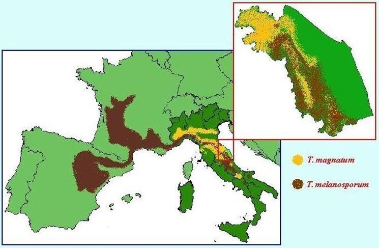 mappa di produzione del Tuber magnatum in Italia