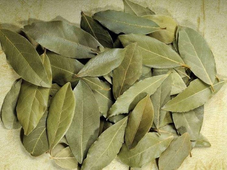 foglie di allloro seccate