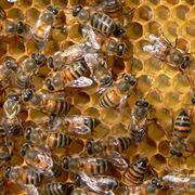 produzione miele