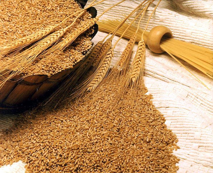 olio di germe di grano<p />