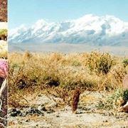 Tuberi di maca nelle coltivazioni andine