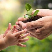 piante per bambini