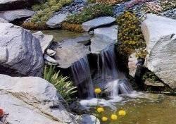 Giardino roccioso composizione fiori for Giardinaggio e fiori