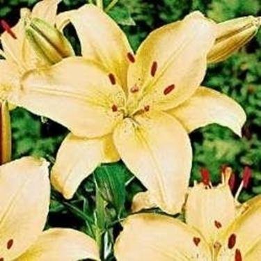 Fiori matrimonio aprile domande e risposte fiori for Nomi di fiori bianchi