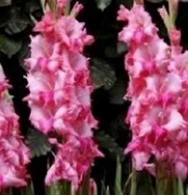 Fiori a settembre domande e risposte fiori for Giardinaggio e fiori