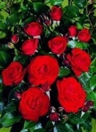 Per dire ti voglio bene domande e risposte fiori for Giardinaggio e fiori