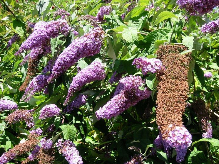 Pianta farfalle fiore