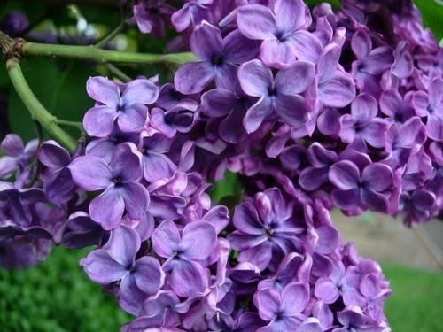 Fiori lill fiori delle piante - Immagini di fiori tedeschi ...