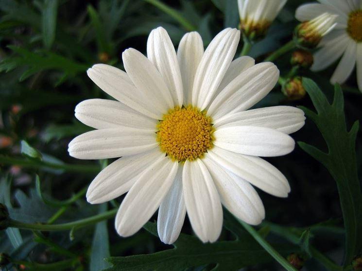 Risultati immagini per fiore