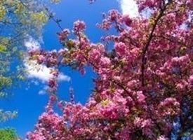 Pianta con fiori rosa