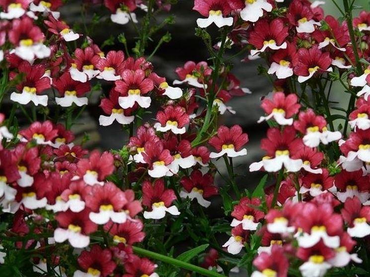 tipi di fiori fiori delle piante