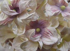 Realizzare fiori di carta