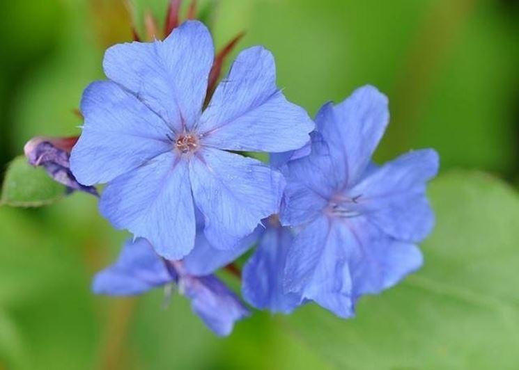 Matrimonio Fiori Azzurri : Fiori azzurri fiorista