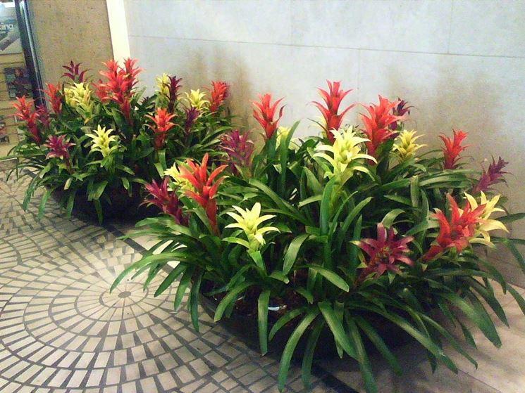 fiori da appartamento fiorista