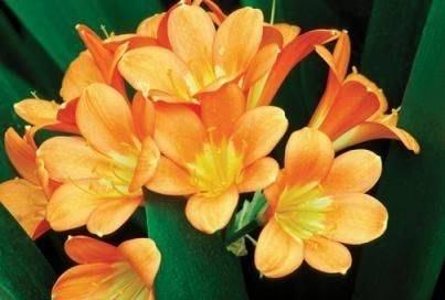 fiori da appartamento - Fiorista