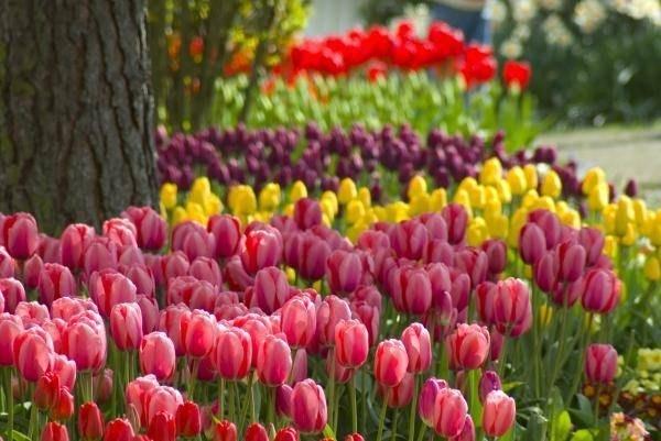Fiori da esterno fiorista for Fiori da esterno
