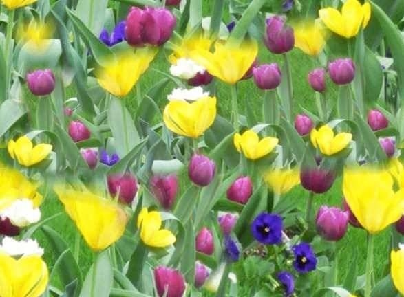 Fiori primaverili fiorista fiori di primavera - Fiori primaverili ...