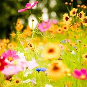 fasci di fiori
