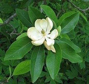 pianta in giardino