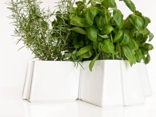 Piante vendita online fiorista for Piante vendita